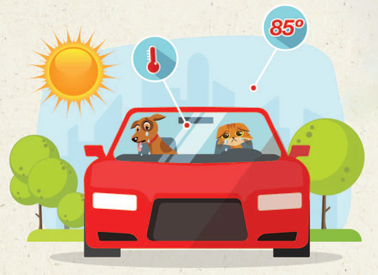 Why You Should Never Leave Your Pet in a Hot Car