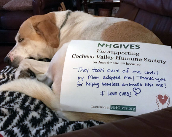 Top Ten Reasons to Give During #NHGives