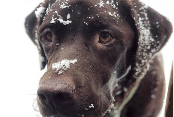 How to Tell When Your Pet is Freezing