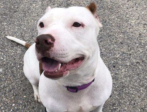 Positive Reinforcement Training for Pets