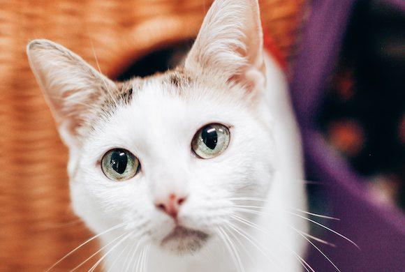 Shelter Studies in Animal Medicine at PMHS