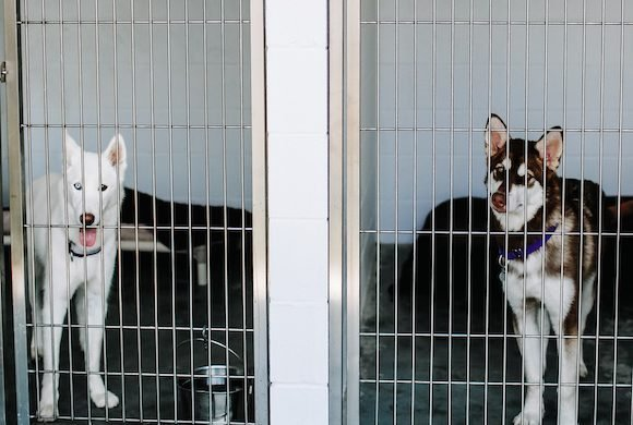 How to Visit an Animal Shelter