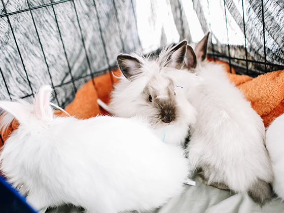 Bunny Rabbit Care